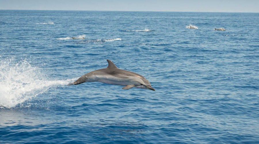 Nage avec les dauphins Cannes Mandelieu